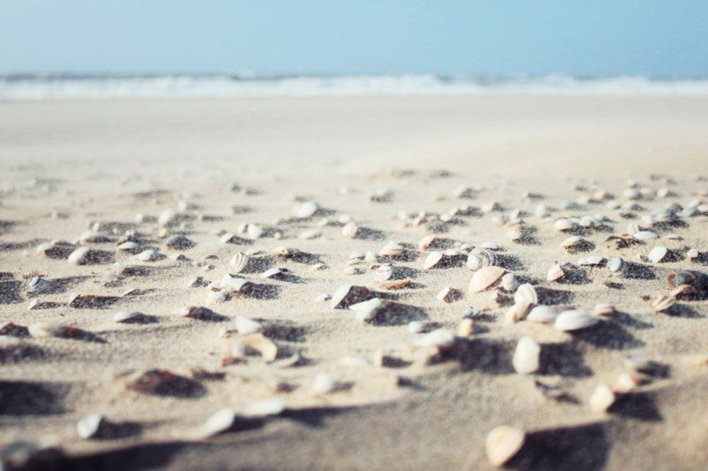 sea-shells-on-beach.jpg